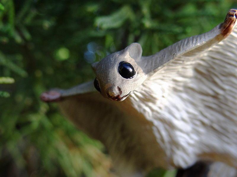 A small walkaround of Eiko's flying squirrel. Eikoh%20Flying%20squirrel%2003
