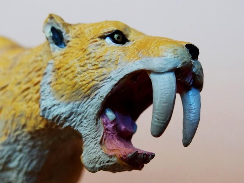Favorite - Prehistoric Life Softmodel - Smilodon fatalis FavoriteSmilodon06