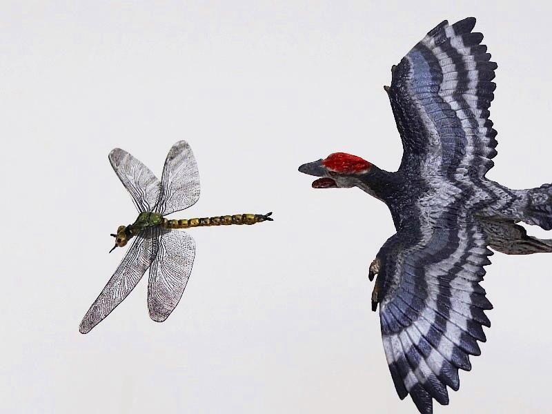 Favorite, Dinosaur Softmodel - Archaeopteryx Favorite%20Archaeopteryx%2003