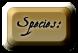 |:|Audric |:| Species