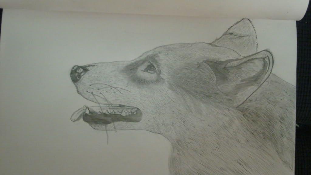 Rune's Birthday Gifts Realisticwolf