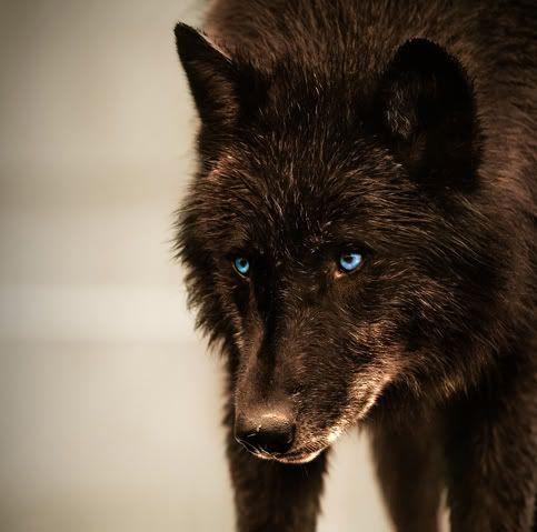 Heath Mirror Image Wolfb