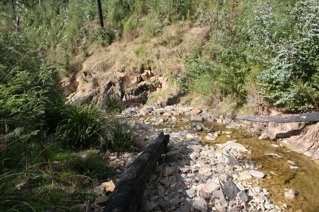 exploring my creek IMG_1827
