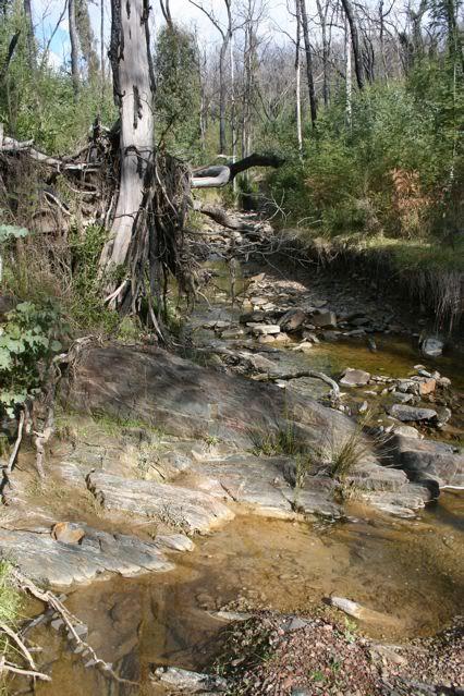 exploring my creek IMG_1829