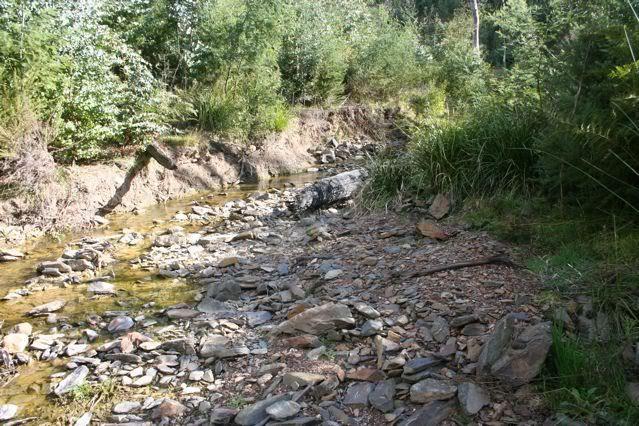 exploring my creek IMG_1834
