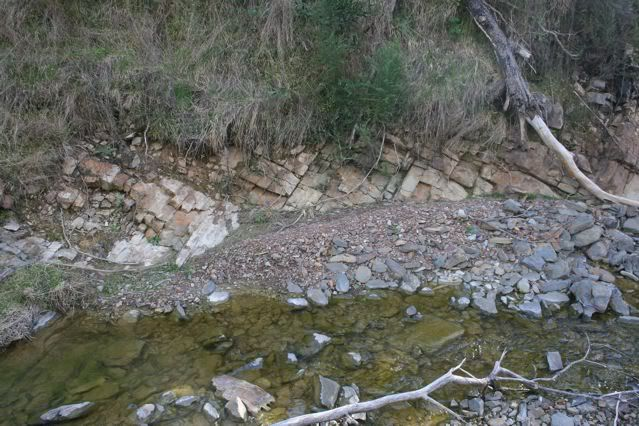 exploring my creek IMG_1837