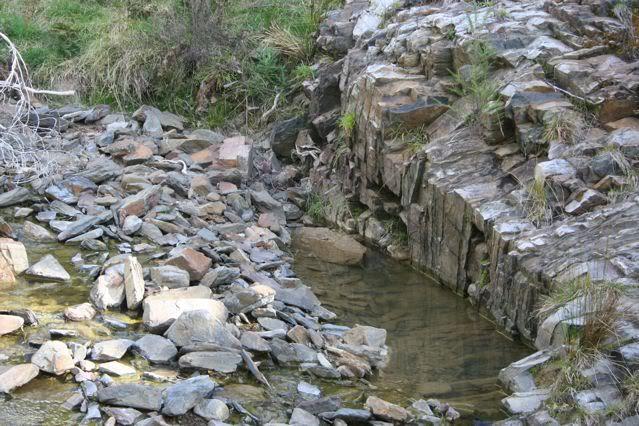 exploring my creek IMG_1838
