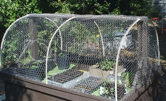 Hoop Garden Box - to keep critters out! HB-ready3-24-2