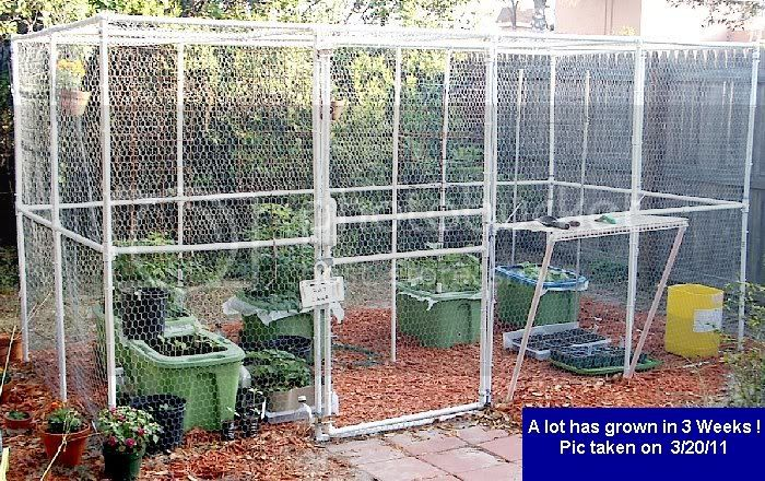 Hoop Garden Box - to keep critters out! RatCage3-21