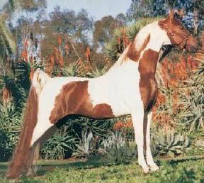 Que caballo es?? Chubasco