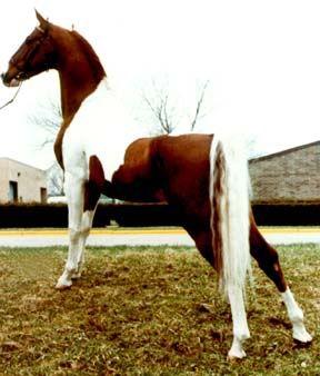 Que caballo es?? Winter_Carnival