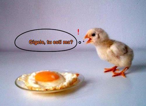 Funny pics Poze_amuzante_d7babea