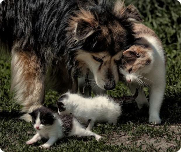 Animal hugs Skzh-46-17-620x519