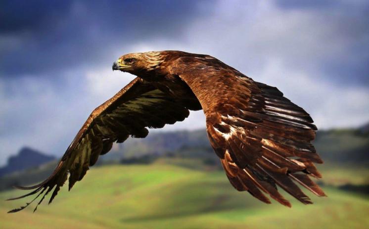 Fotos de animales de todo tipo incluyendo mascotas que más te gustan Aguila2