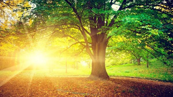 Живые души деревьев 1888737_600