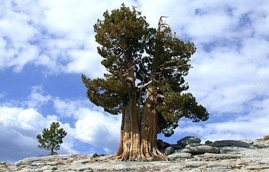 Живые души деревьев 1888872_600