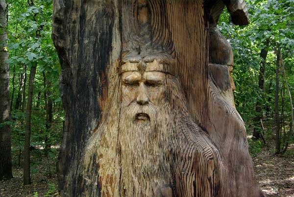 Живые души деревьев 1889151_600