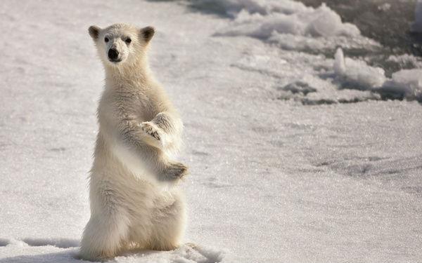 Заботливое освоение Аркти 44169_900