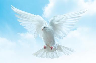 Мир в Новороссии становится реальностью 77523_900