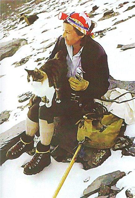 Кот - альпинист 523942_original