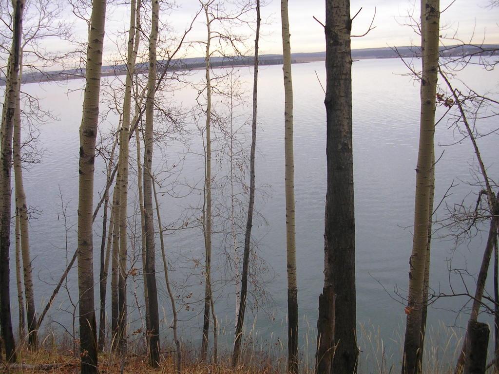Лесной массив в районе Ешовских заливов 263493_original