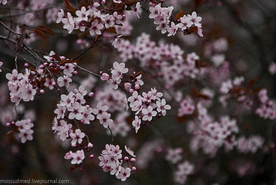 Красивые фотографии 1587815_original