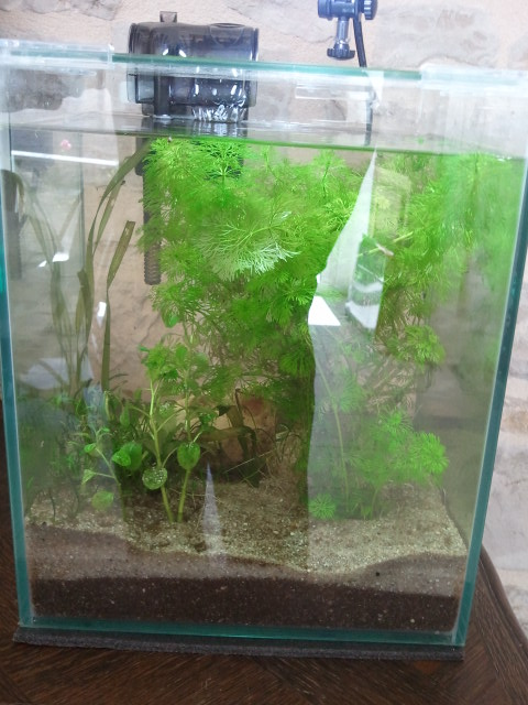 Nano planté 2012-09-21%2012.53.34