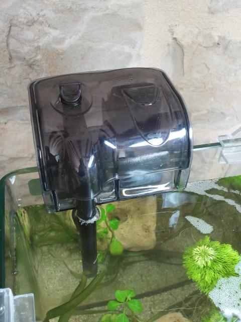 Nano planté 2012-09-21%2012.55.00