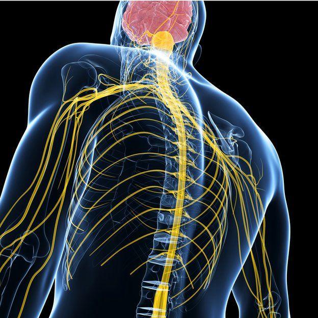 Ultimos Avances en Ciencia y Salud - Página 25 _90943859_thinkstockphotos-450570881