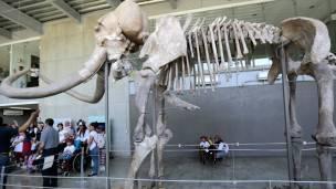 Recuerdos del pasado /Antiguas civilizaciones 160331051259_mamut_esqueleto_304x171_epa_nocredit
