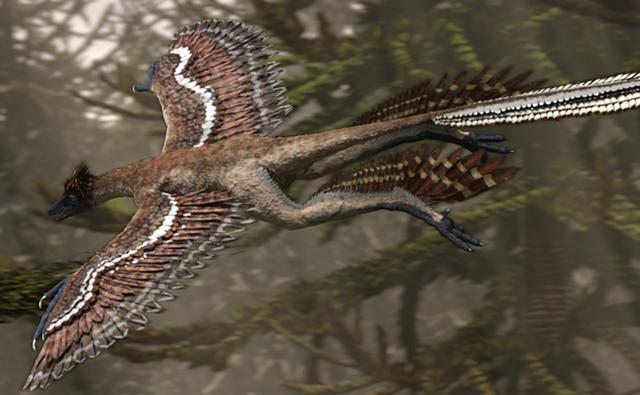 Le père de tout les oiseaux Microraptor_1