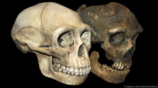 The mystery of Neandertal's massive eyes P02yppks