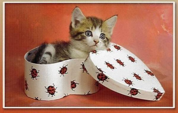 La boite à chat Chat-boite