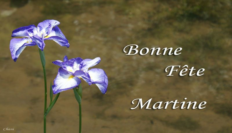 bonne fête Martine Martine2