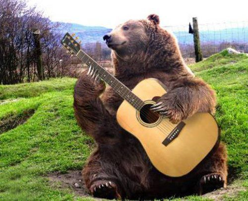 un peu de musique ca vous  dit ? - Page 5 Ours-musicien-guitariste