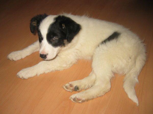 BLANC - Un Loup blanc de deux mois à l'essai ... help! - Page 3 Fye2