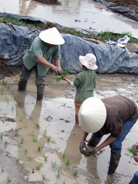 Une histoire de riz, un peu d'Indochine dans l'Allier  Transmission-du-savoir
