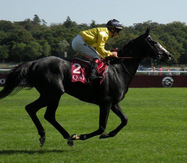 Saison 2012 C3-Meandre
