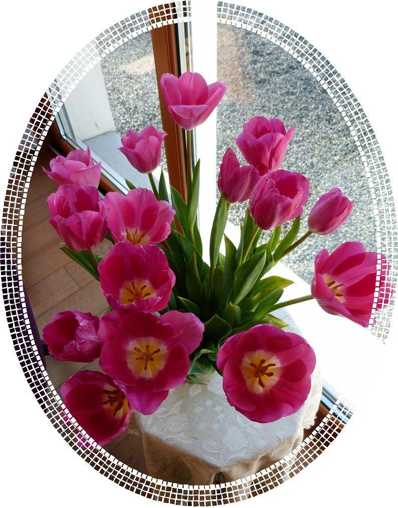 Bon Mercredi Tulipe