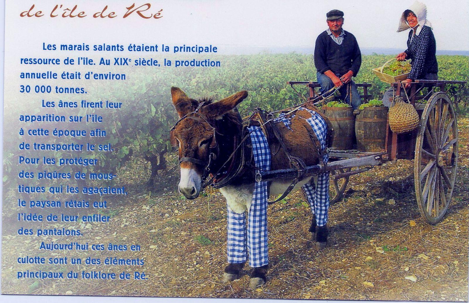 Honneur aux ânes  - Page 2 Hpqscan0008