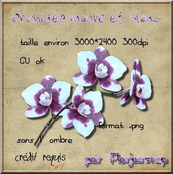 orchidée mauve et blanche Preview-orchid-e