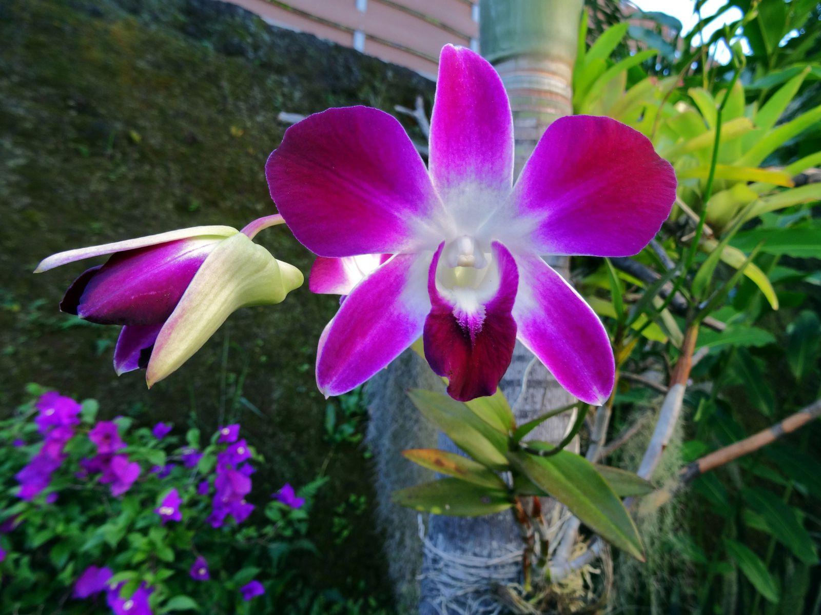 une fleur - ajonc - 20 janvier trouvée par Martine Papeete-Orchidee-violette