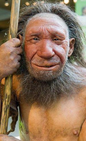 Les voisins d'Adam Neandertal