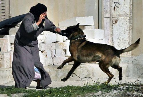 """""""Mauvais traitement"""" des enfants palestiniens en détention par Israel Femme-palestinienne-mordue-par-un-chien"""