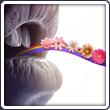 L'antre d'Idril Lightin-flower