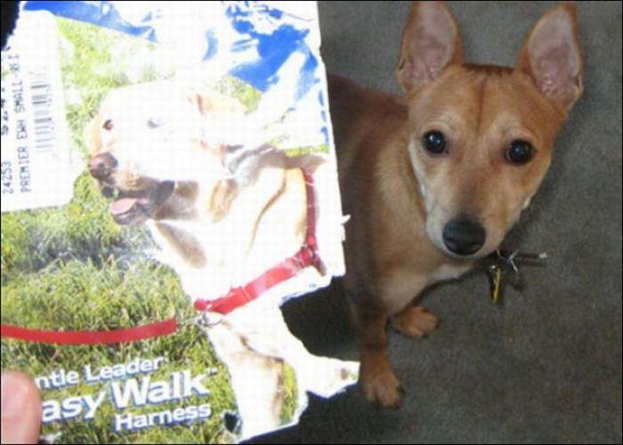 les bêtises des animaux domestiques Animaux-betises-2012918