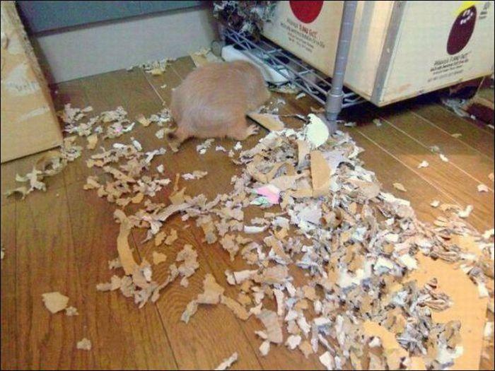 les bêtises des animaux domestiques Animaux-betises-2012923
