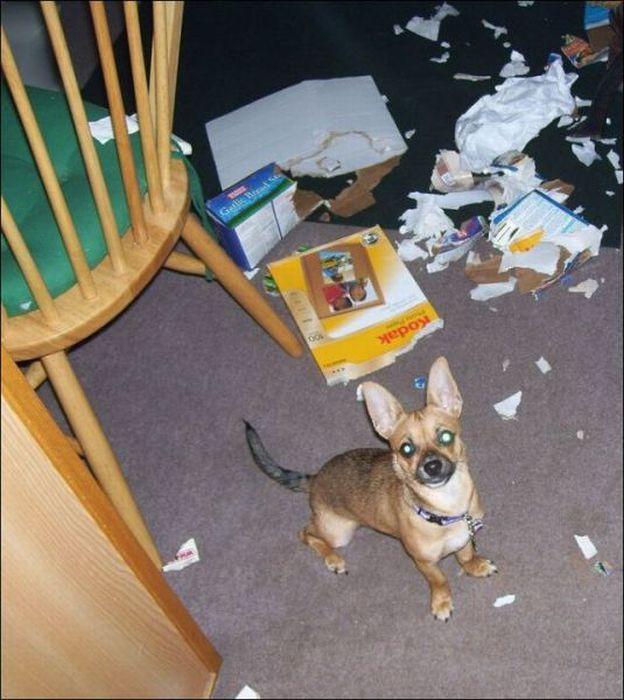 les bêtises des animaux domestiques Animaux-betises-2012924