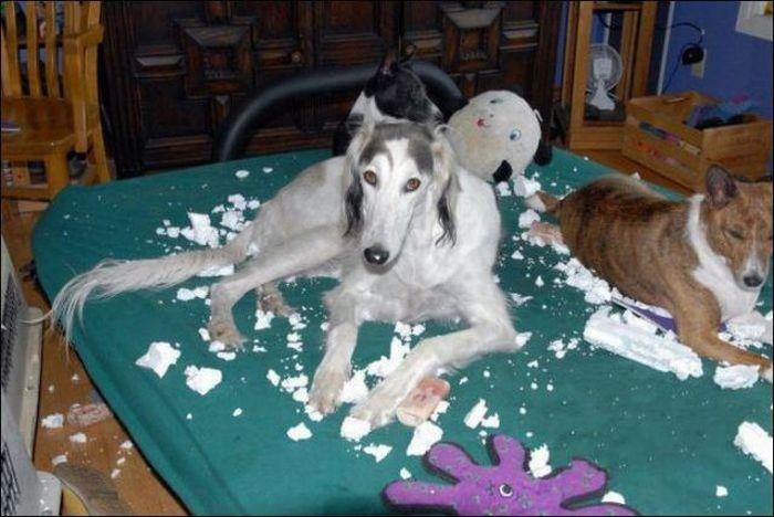 les bêtises des animaux domestiques Animaux-betises-2012925