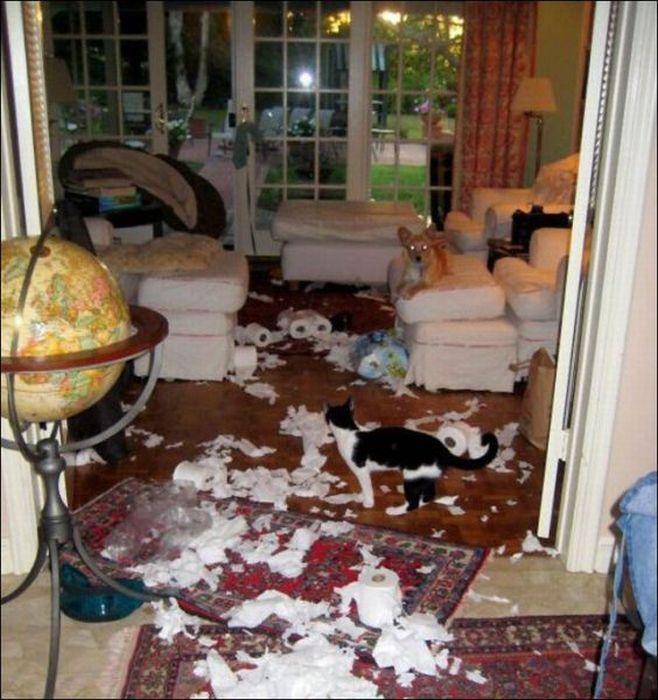 les bêtises des animaux domestiques Animaux-betises-2012926
